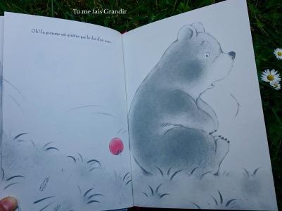 La pomme rouge dos ours
